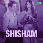 Shisham